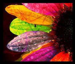 colorful photo