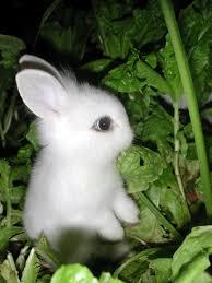cutest little baby