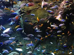 amazon tropical fish