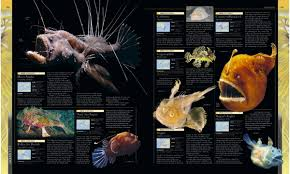 bony fish pictures