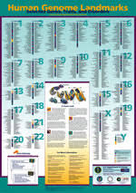 human genome poster