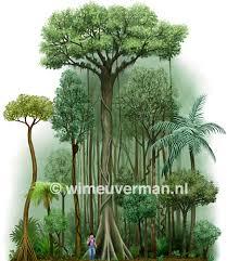 rainforest layers