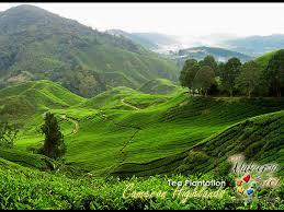 cameron highland malaysia