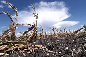 natural disaster drought