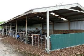 calving shed