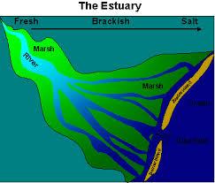 picture of estuary