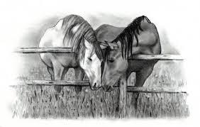 pencil drawings horse