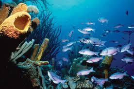 bonaire scuba diving