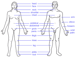 body parts photos