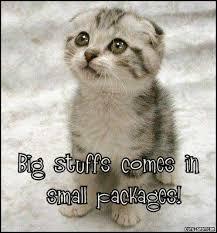 cute cats funny