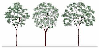 autocad trees blocks