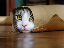 chats dans Rigolo d4zowapt