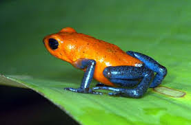 frog pics