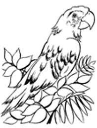 dibujos de loros