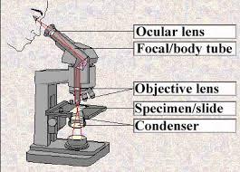 compound light microscope label