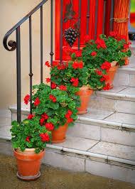 bright red colour