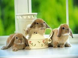 animal rabbit