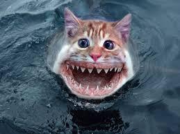 peixe panga