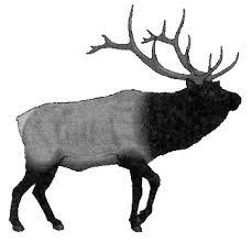 elk animal