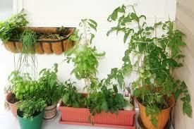porch plants