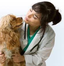 pictures of veterinarians at work