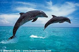 dolphins for sale