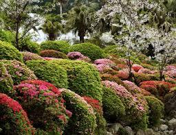 bushes garden