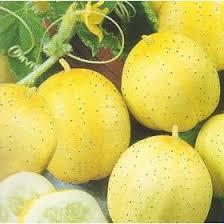 lemon cucumber