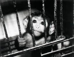 animal testing photos