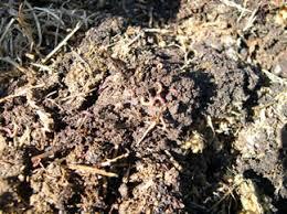 suelos organicos
