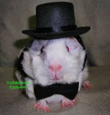 clothes for guinea pigs