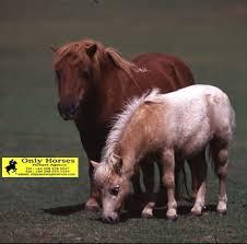 ponies pictures