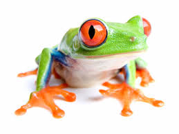 amphibian photos