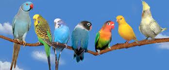 http://t0.gstatic.com/images?q=tbn:uckUsQVJy25iXM:http://www.tri-dart.com/PHOTOS/images/animaux_animals/perruches_perroquets_ara_oiseaux_birds_photos.jpg