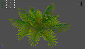 pictures of palm plants