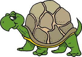 clip art of turtle