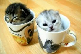 pictures of kittens for sale