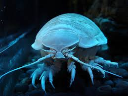 pictures of deep sea