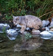 cat overpopulation