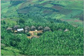 africa forests