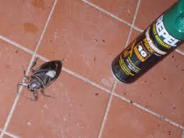 killer cockroaches