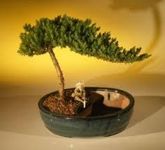 bonsai water