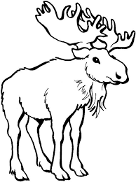 moose coloring sheets
