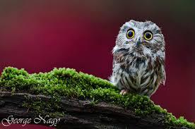 animal owl