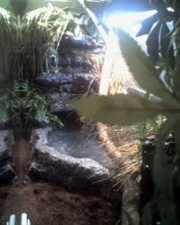 chinese water dragon enclosure