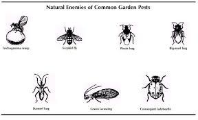 pests home