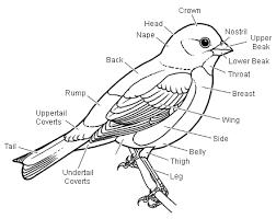 bald eagle diagram