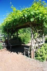 grape vine arbor