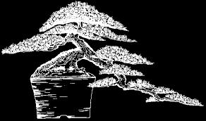 bonsai types