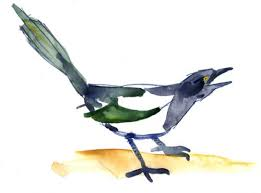 magpie cartoon